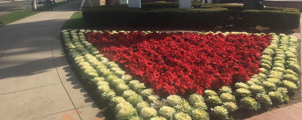 Photo of Christmas garden in California